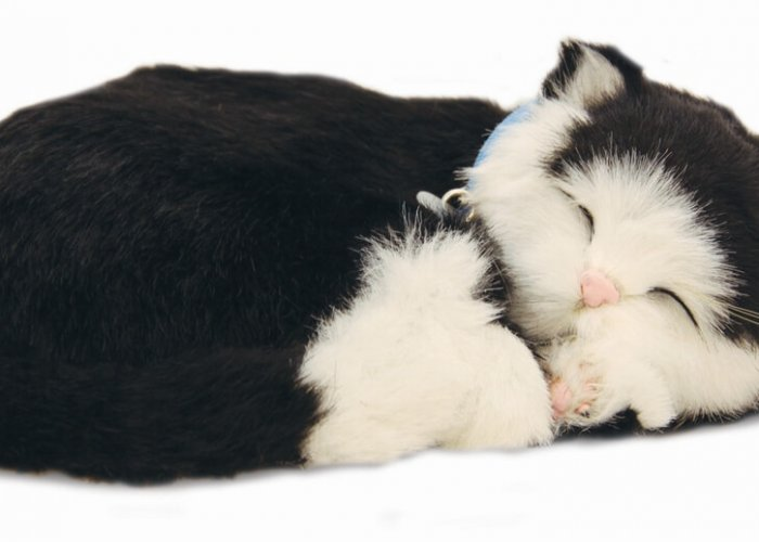 Precious Petzz – Black & White Cat
