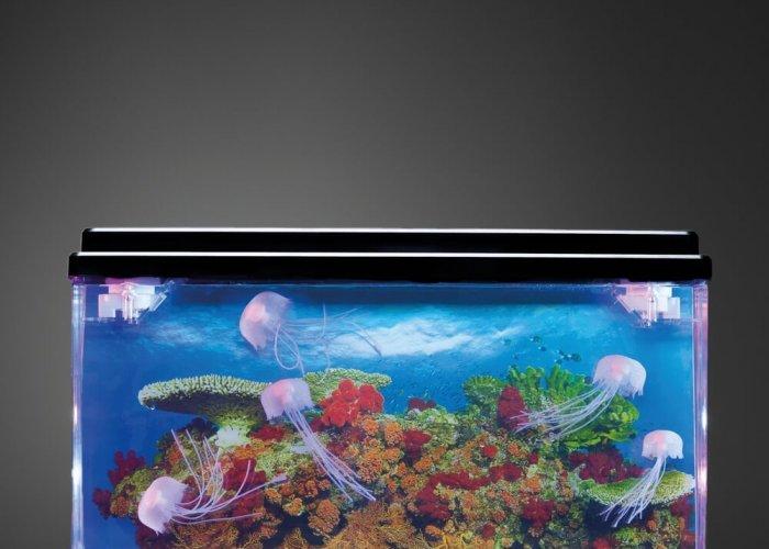 Large Jellyfish Tank
