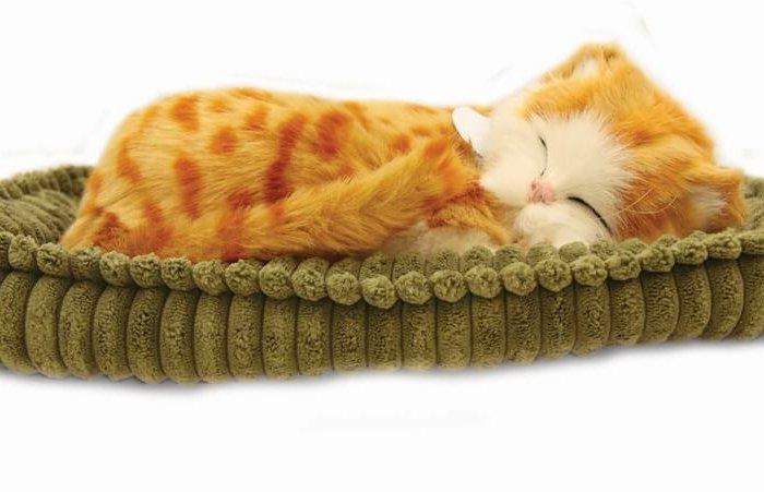 Precious Petzz – Ginger Tabby Cat Developmental